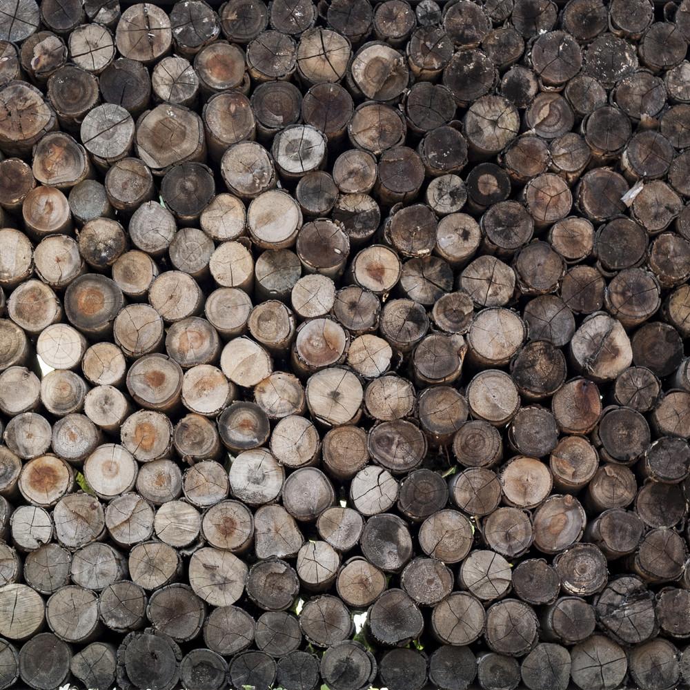 a pile of cut wood stump log texture