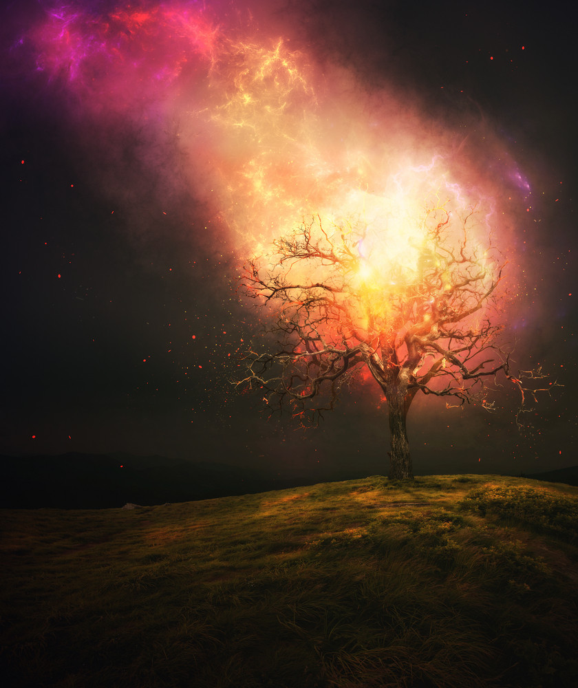 A tree in the meadow is burning up from fire from heaven.