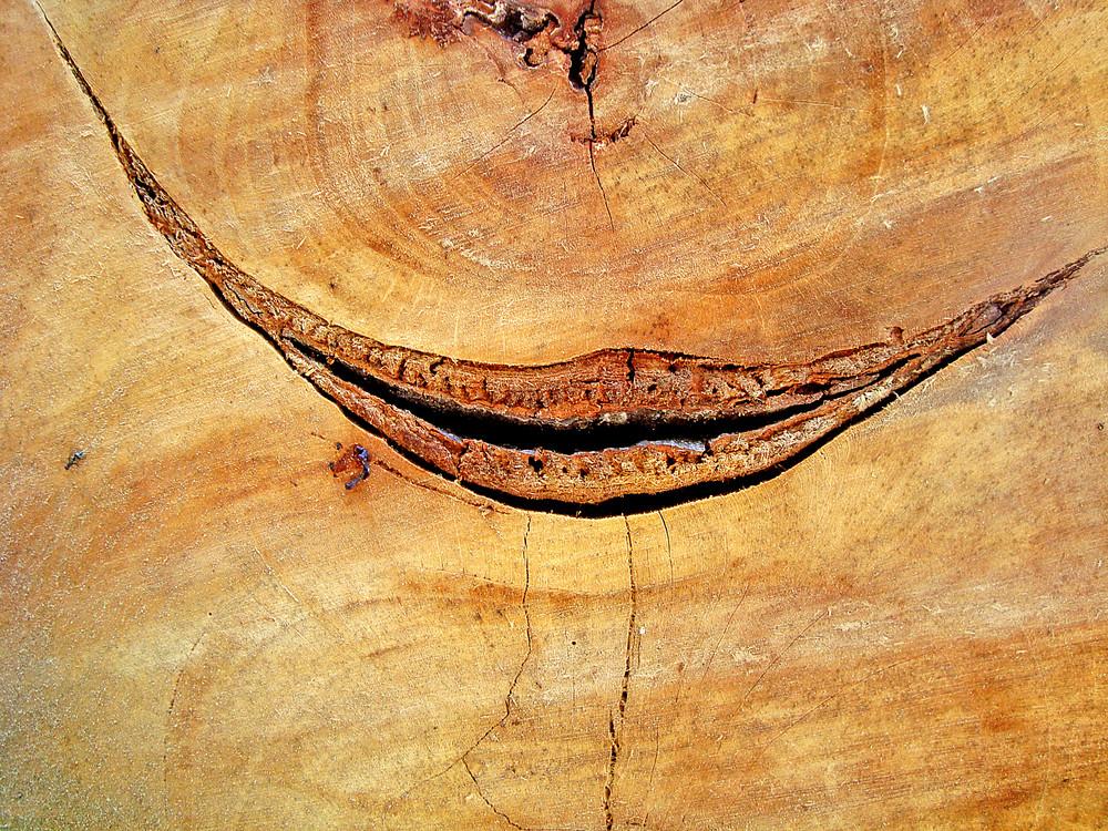 A_texture_of_oak_wood_texture