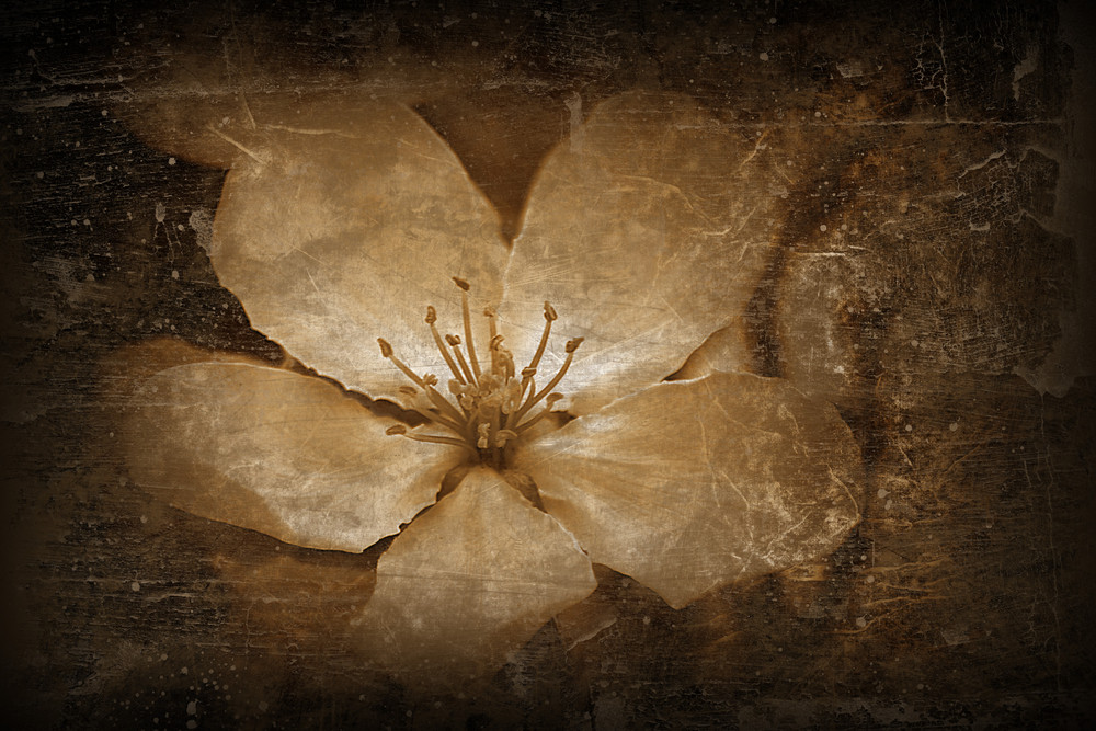 Abstract Aged Flower Background