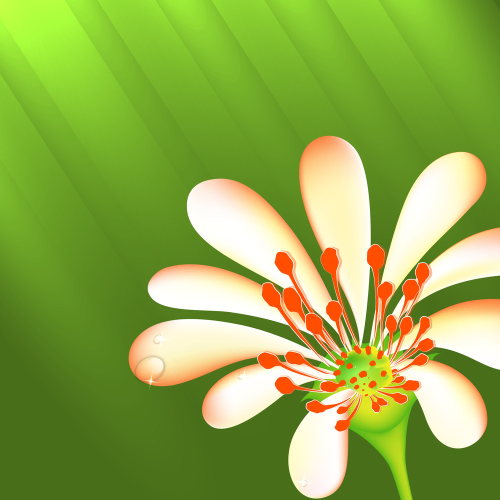 Abstract Nature Concept With Flower On Shiny Green Background.
