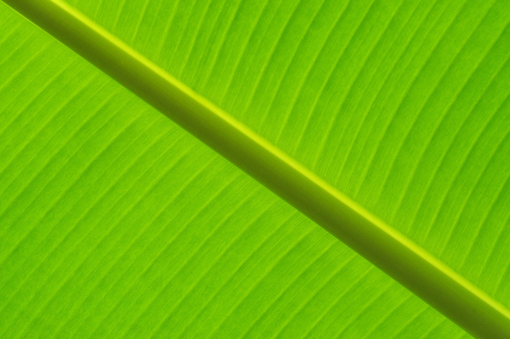 Abstract Of Banana Leaf