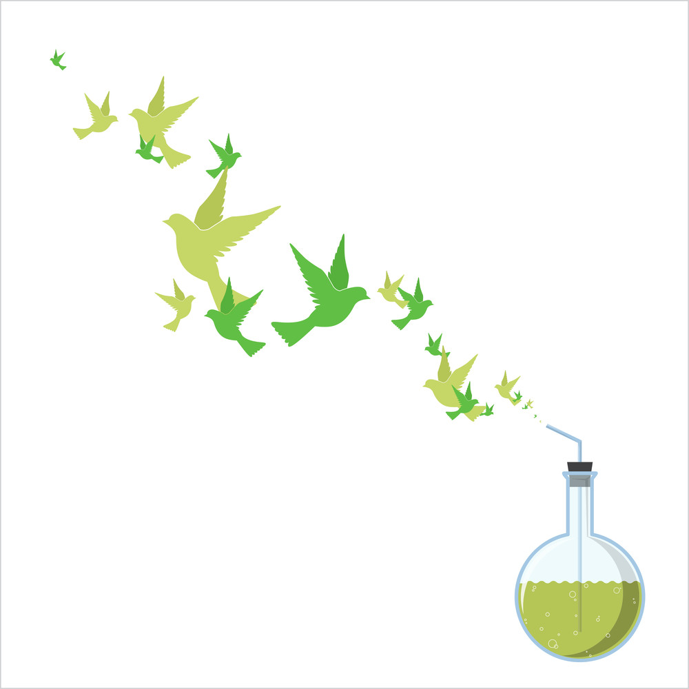 Abstract Vector Illustration Of Flask And Birds.