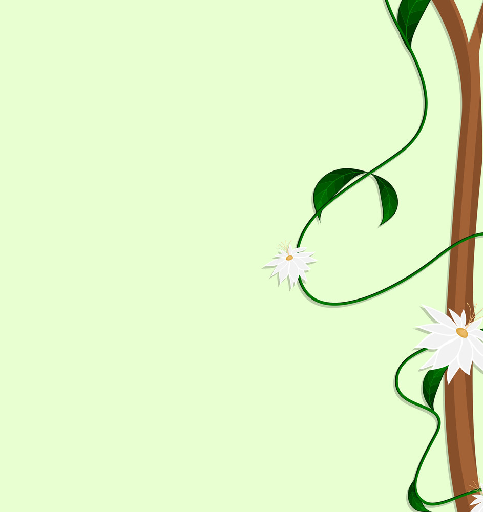 Abstract White Flowers Branch Frame
