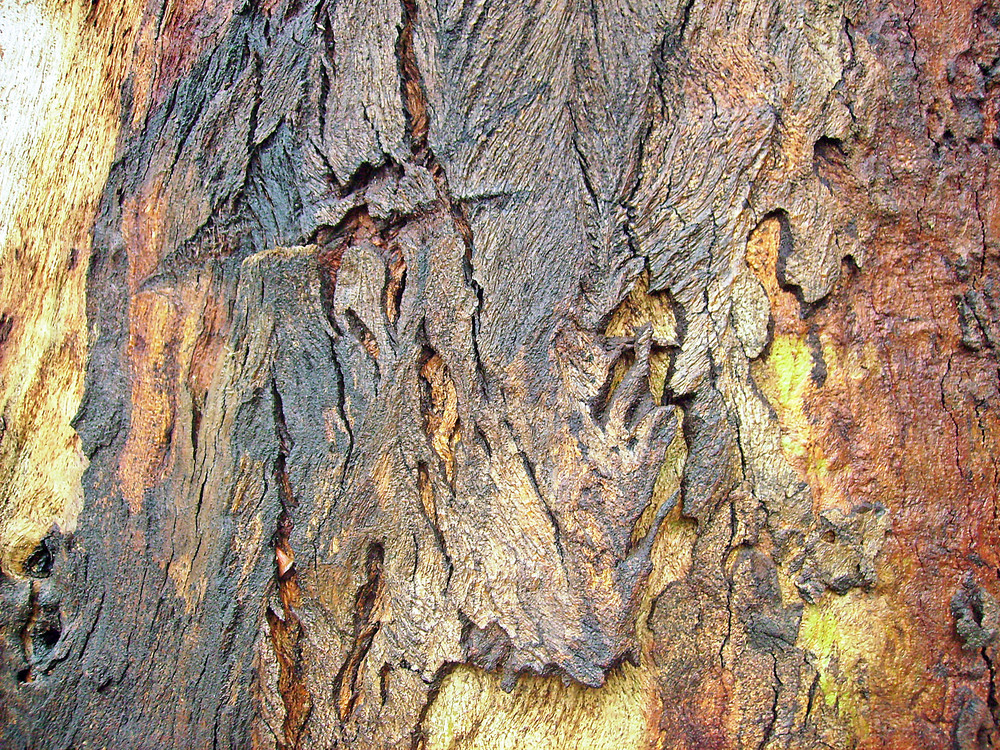 Abstract_bark_texture