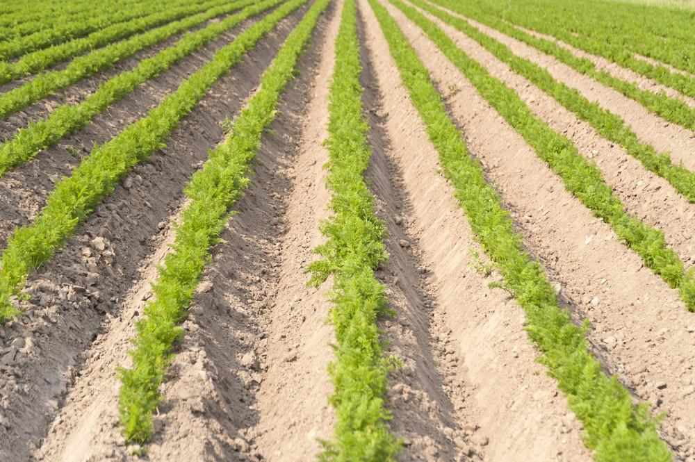 Agricultural Landscape In Germany