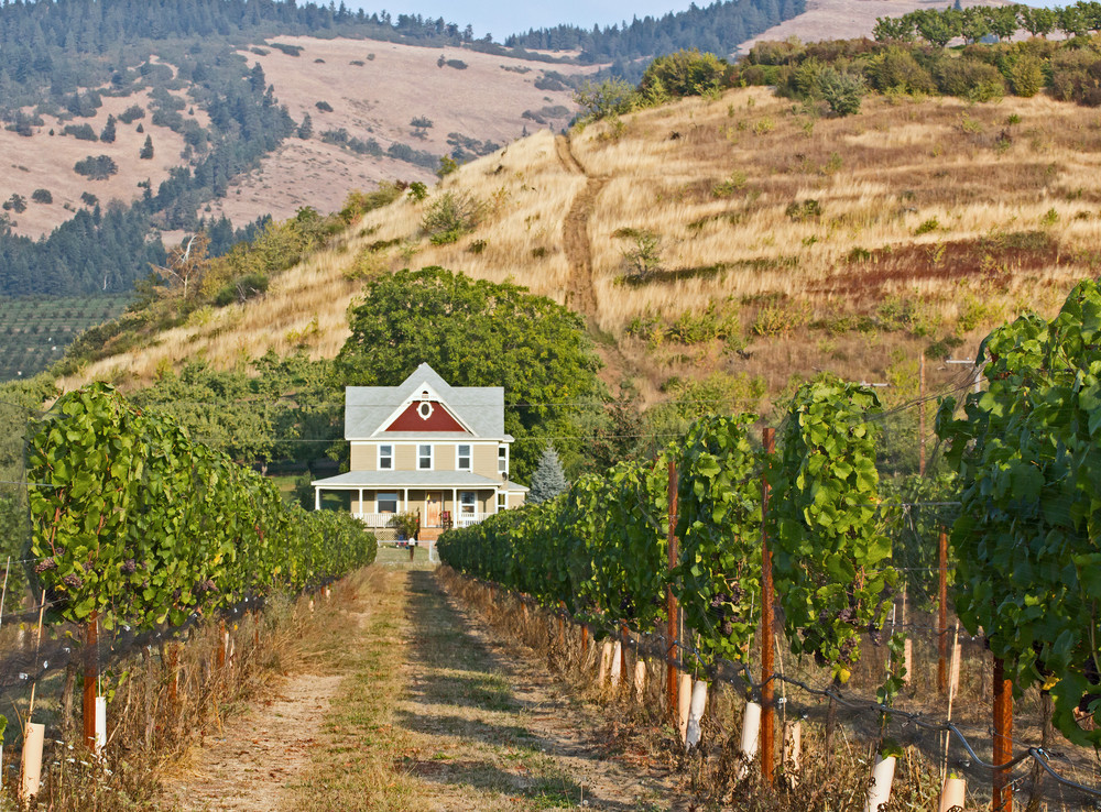 Agriculture Vineyard Home