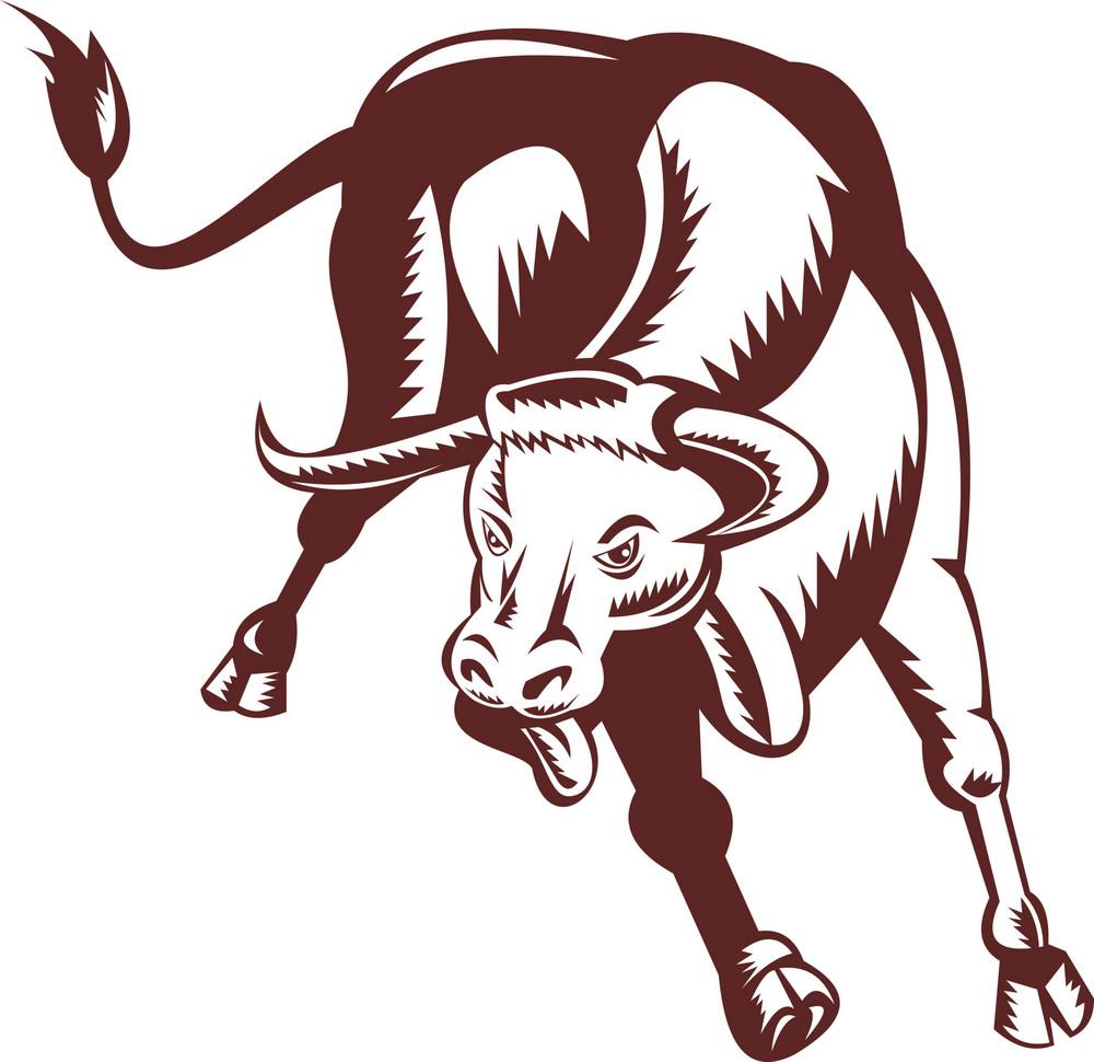 Angry Texas Longhorn Bull Charging