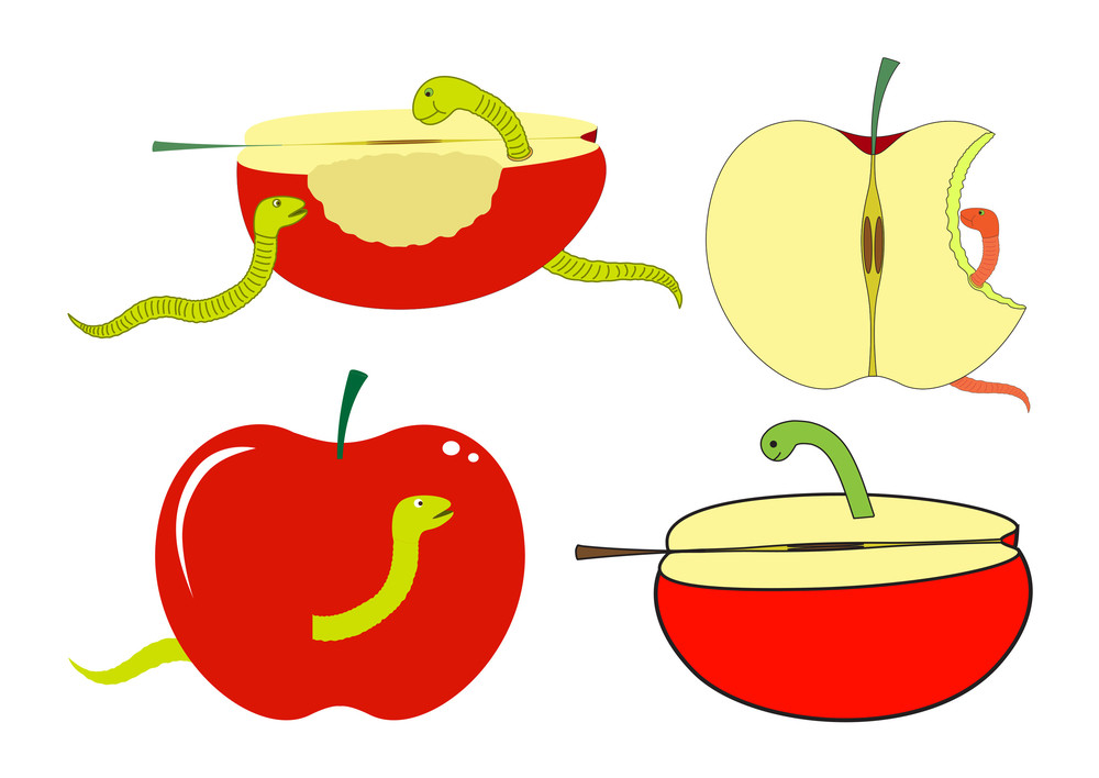 Apple Slices And Pieces With Worm