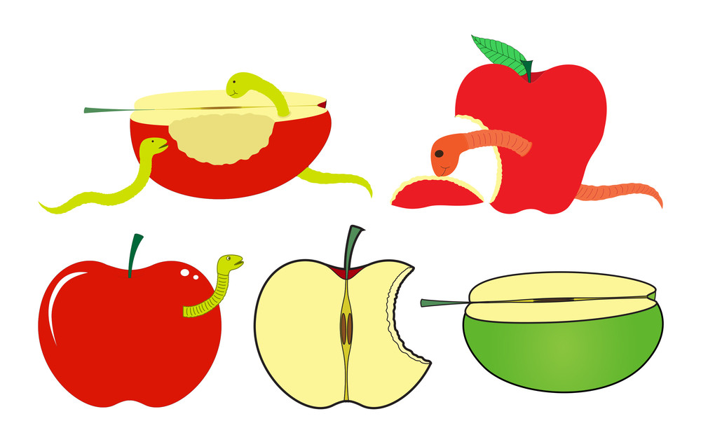 Apples Slices With Worms