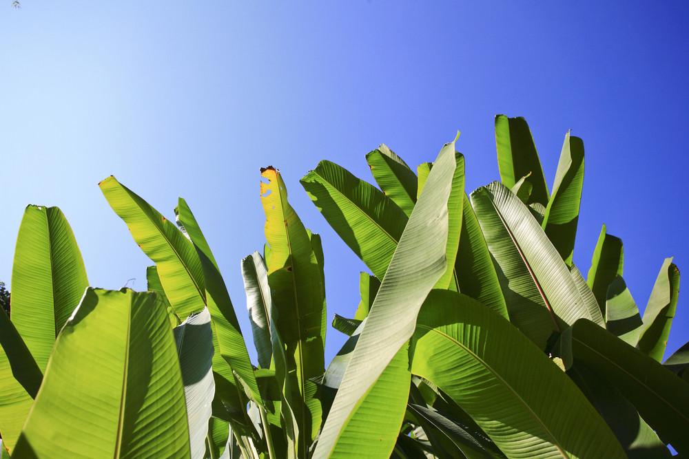 Art Banana leaf on sky