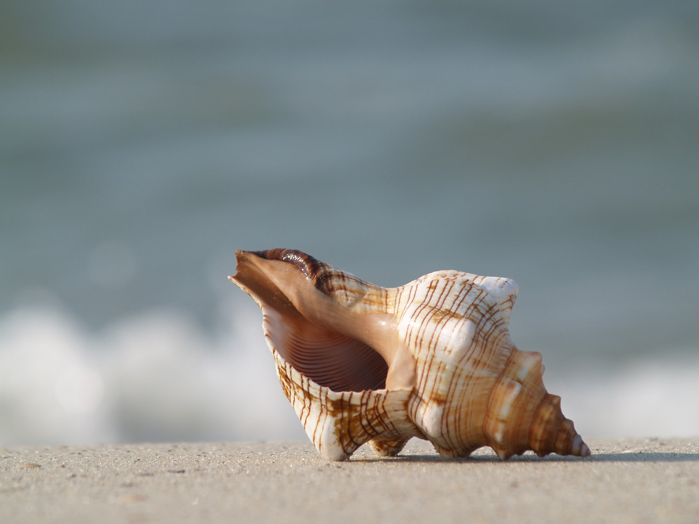 At The Wild Ocean Beach