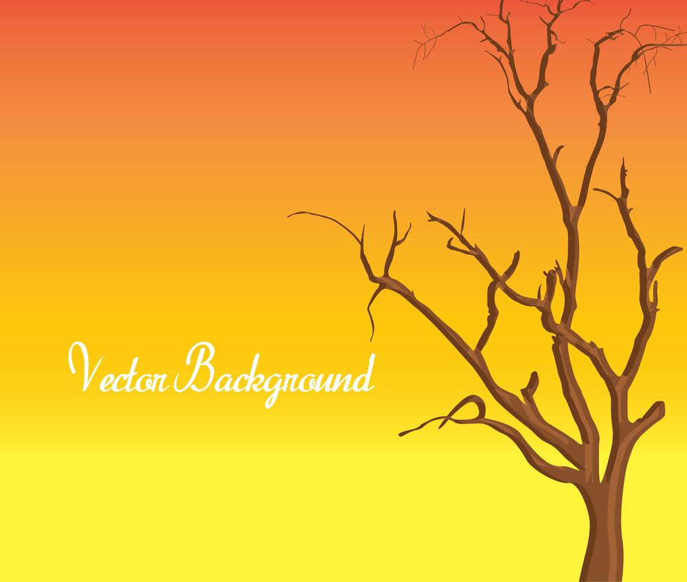 Autumn Dead Tree