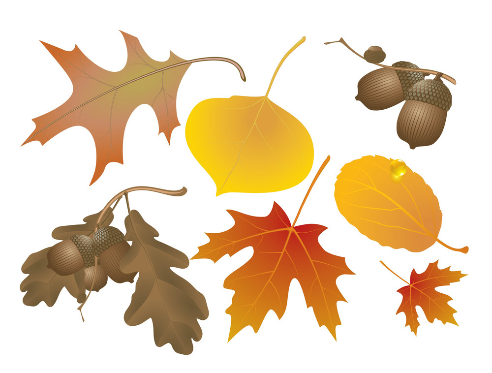 Autumn Decoration Elements. Vector.