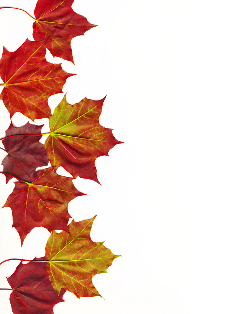 Autumn Leaves With Clipping Path
