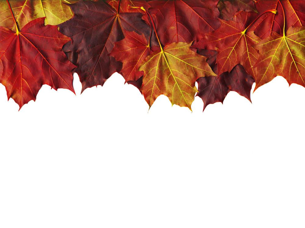 Autumn Maple Leaves Border