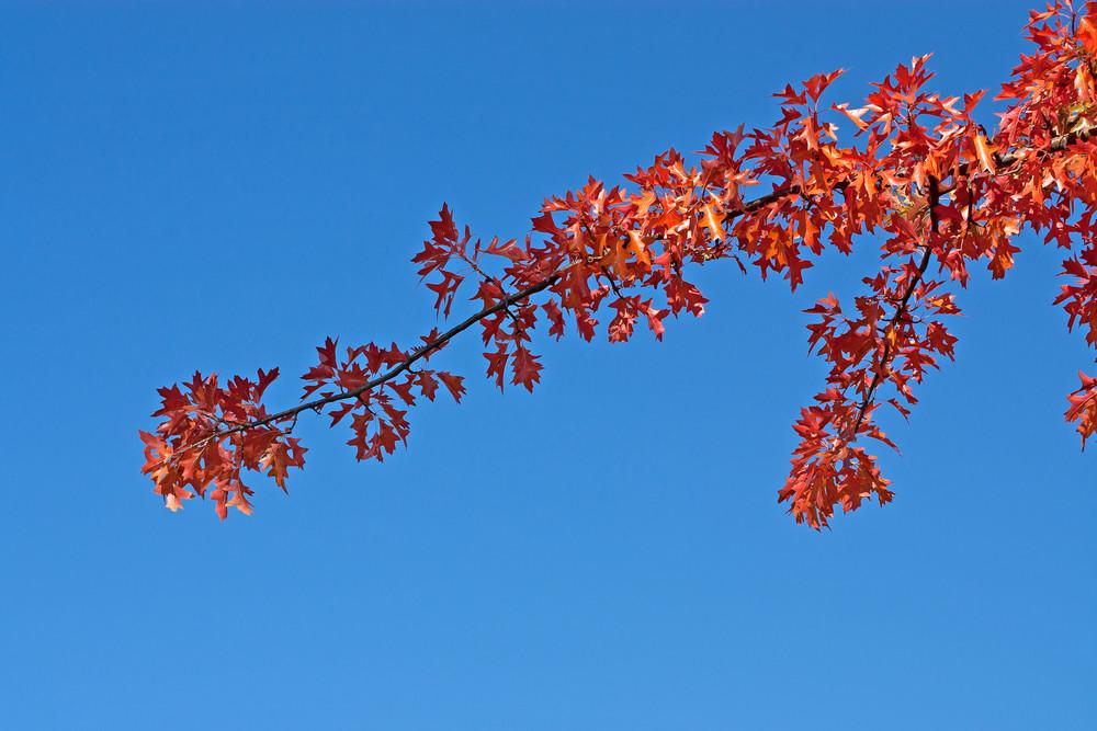 Autumn Red Branch