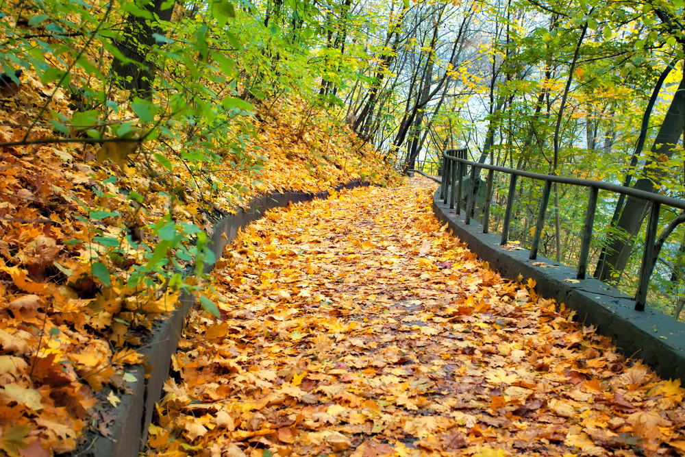 Autumn road strewn with leaves