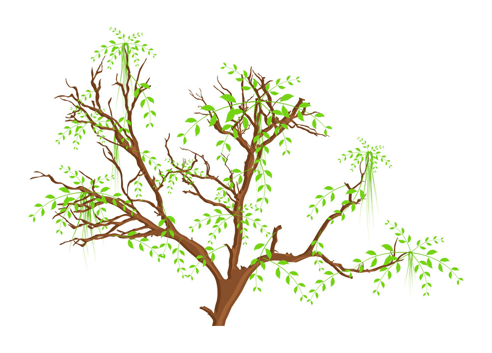 Autumn Spring Tree Leaves