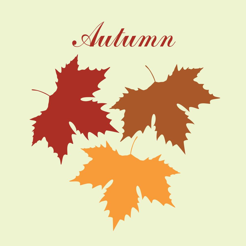 Autumnal Maple Leaf Background