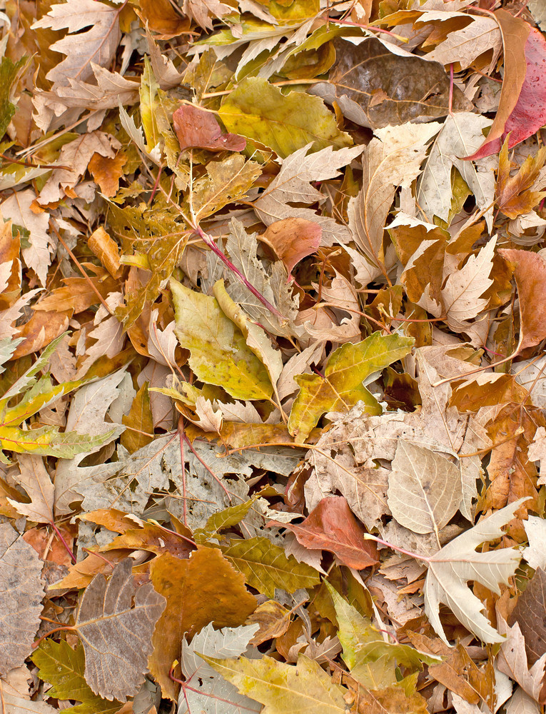 Backgrounds Autumn Leaves Vertical
