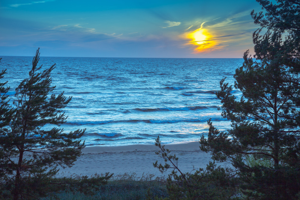 Baltic sea coast with pine trees at sunset