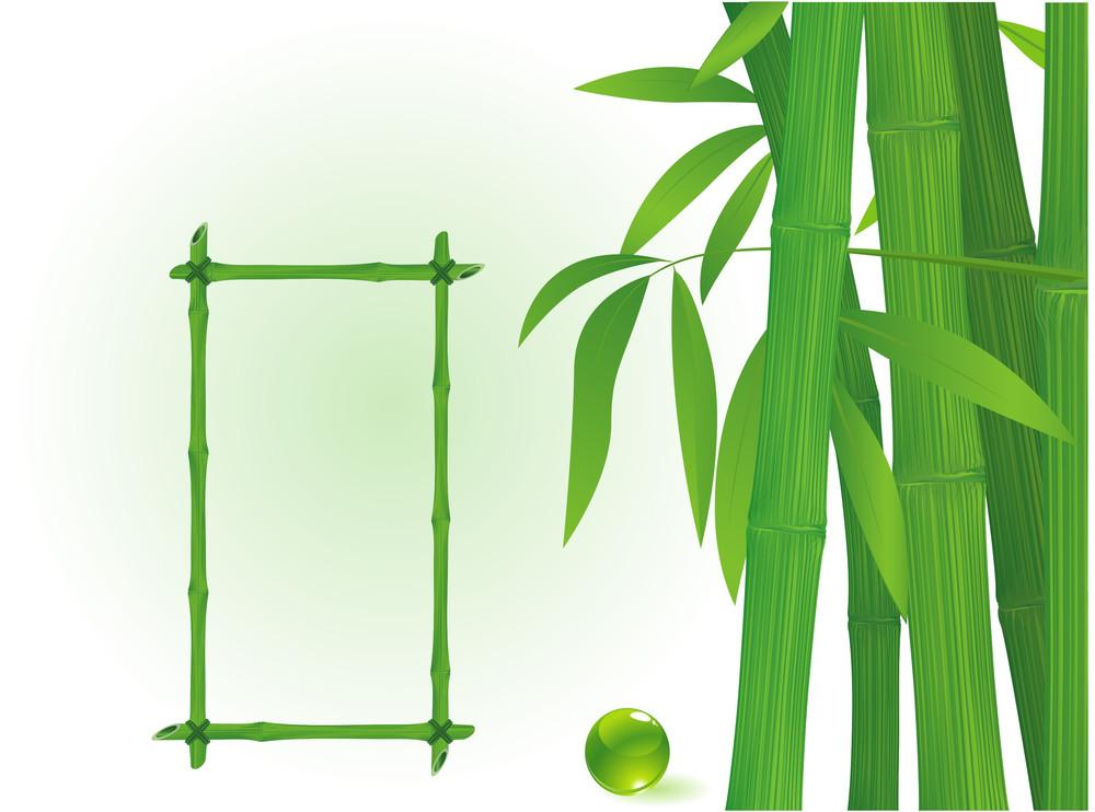 Bamboo Frames. Vector.