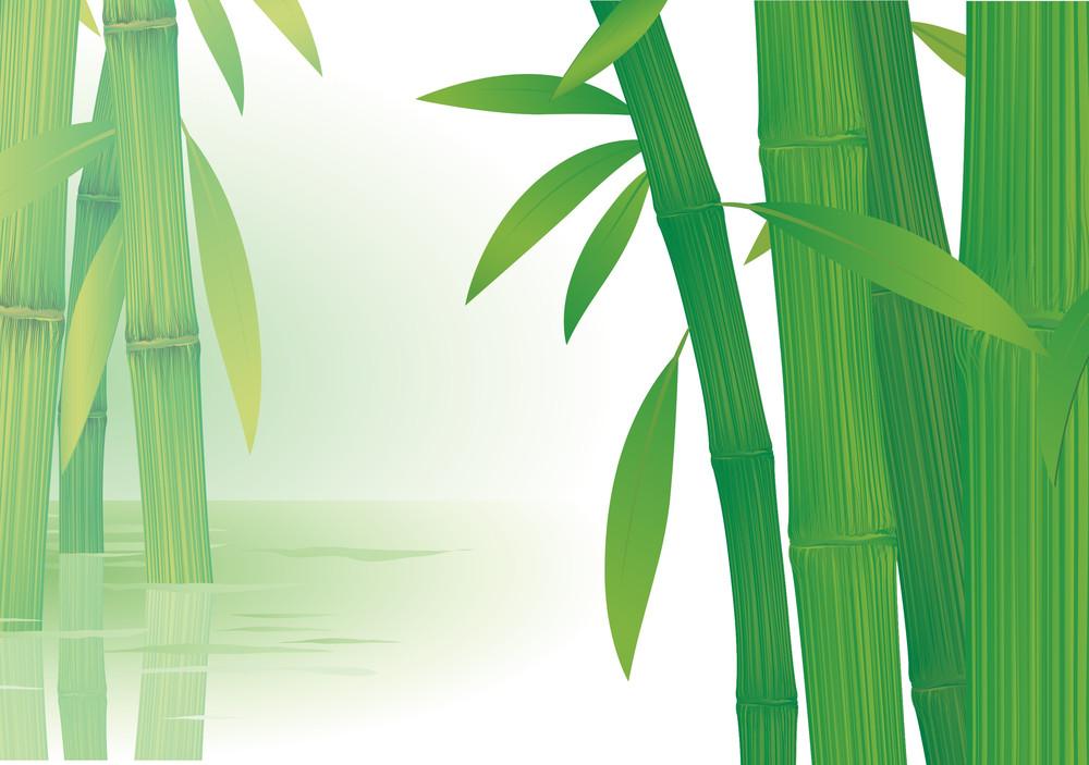 Bamboo. Vector.
