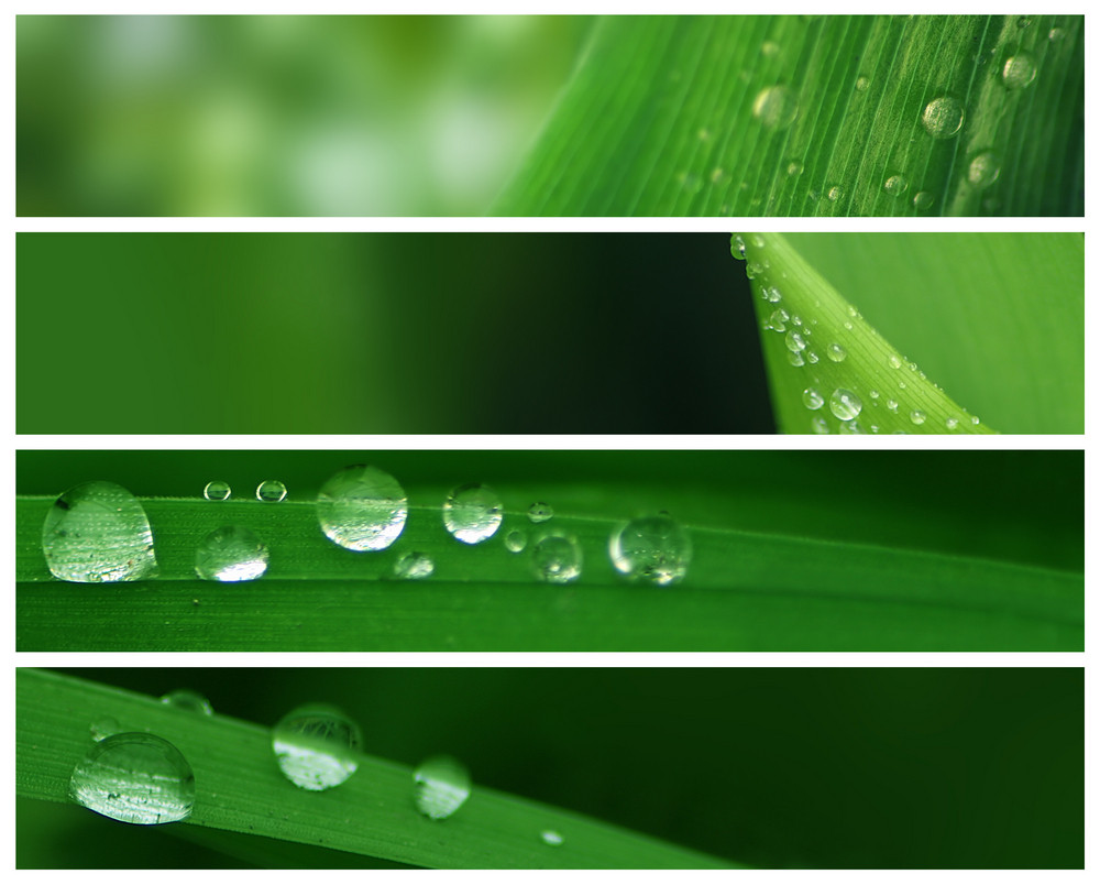 Banners - Water Drops In Nature
