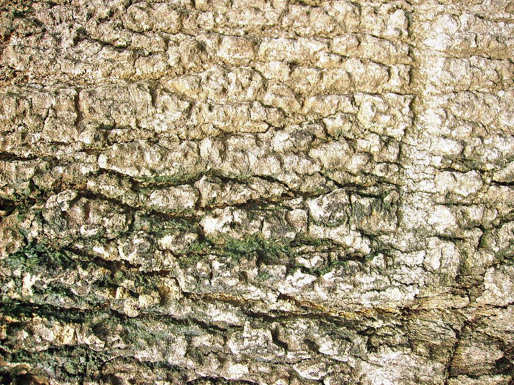 Bark_material