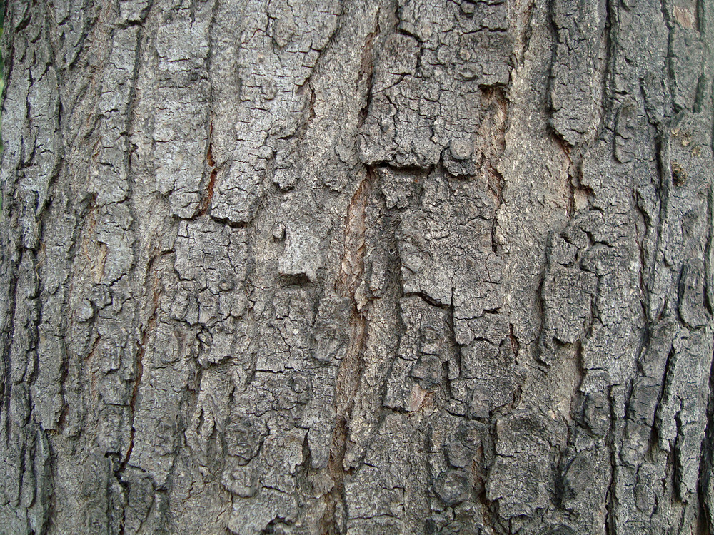 Bark_surface