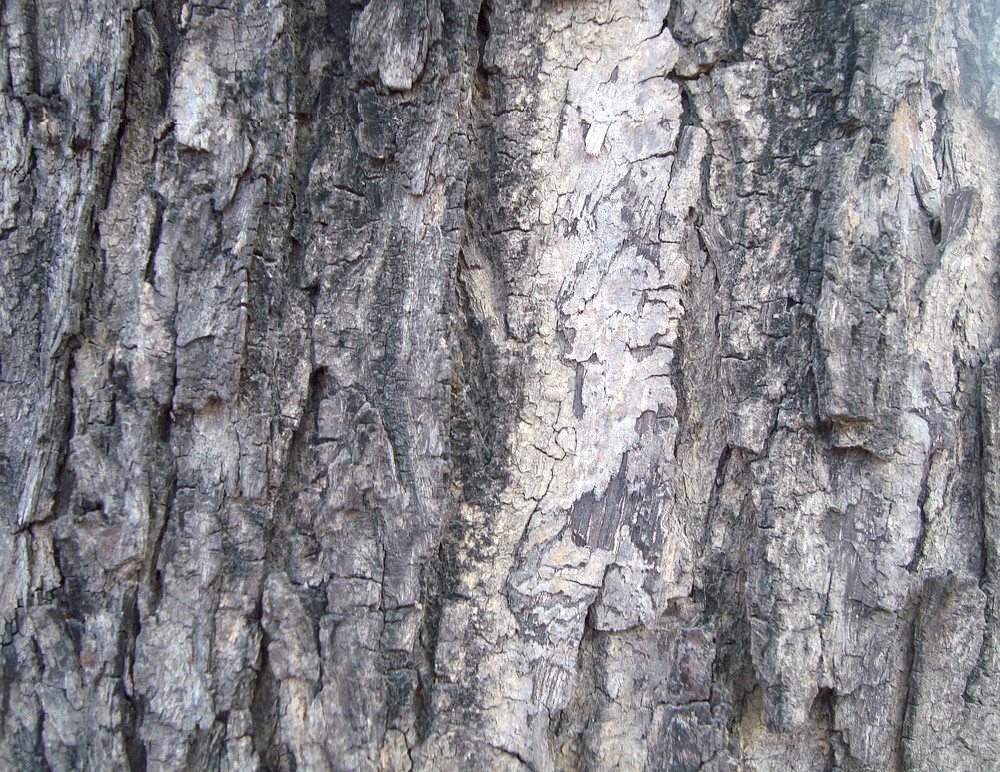 Bark_wood