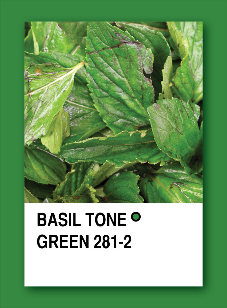 Basil Tone Green. Color Sample Design