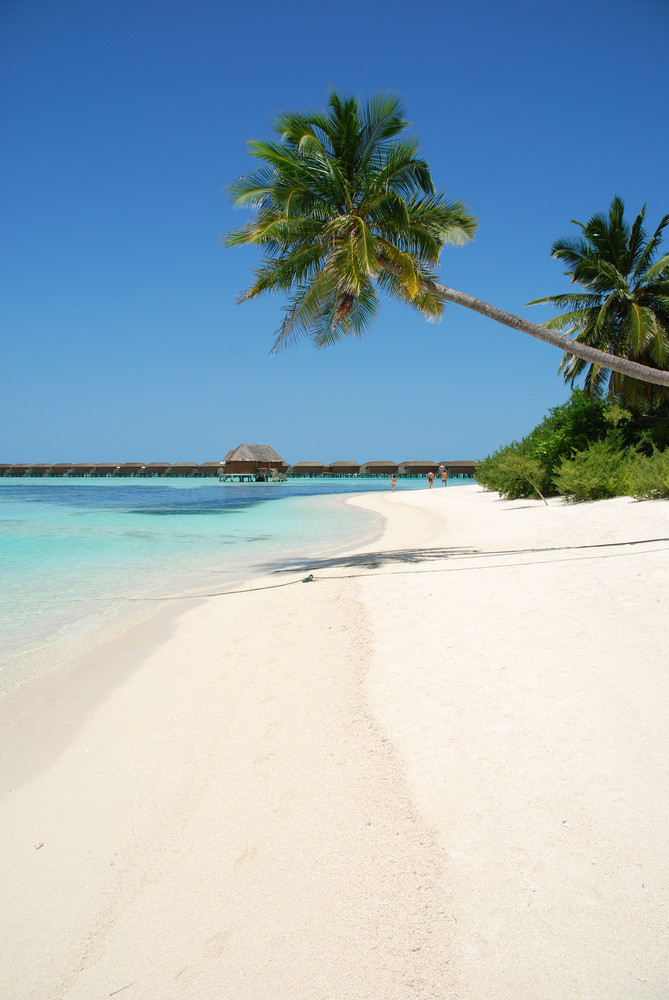 Beach Paradise With Palm Tree Hanging
