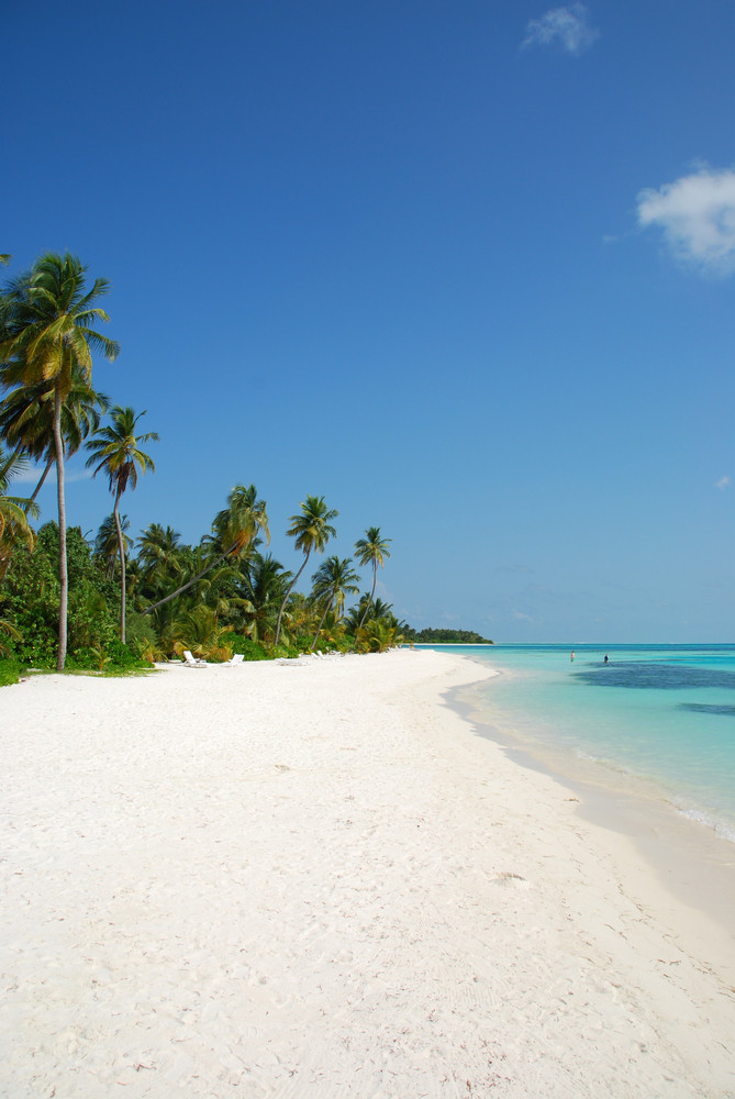 Beach Paradise With Palm Trees