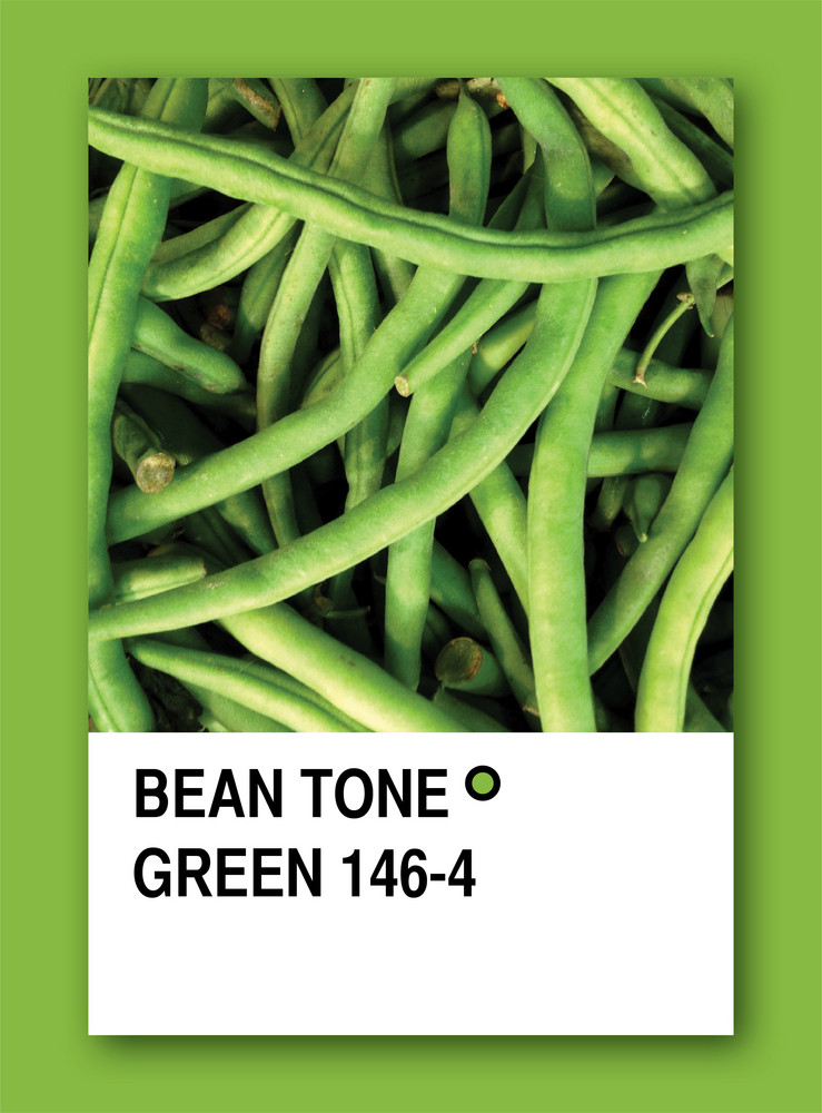 Bean Tone Green. Color Sample Design