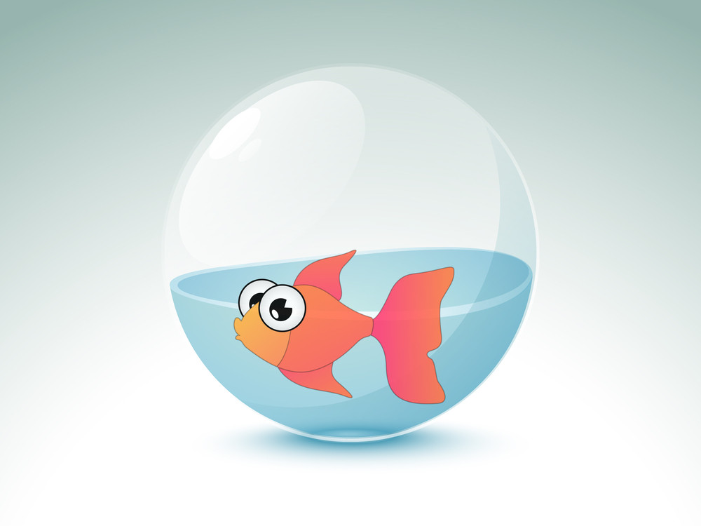 Beautiful Fish In A Aquarium.