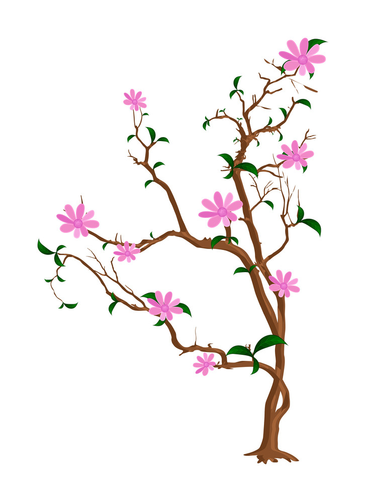 Beautiful Flowers Branches