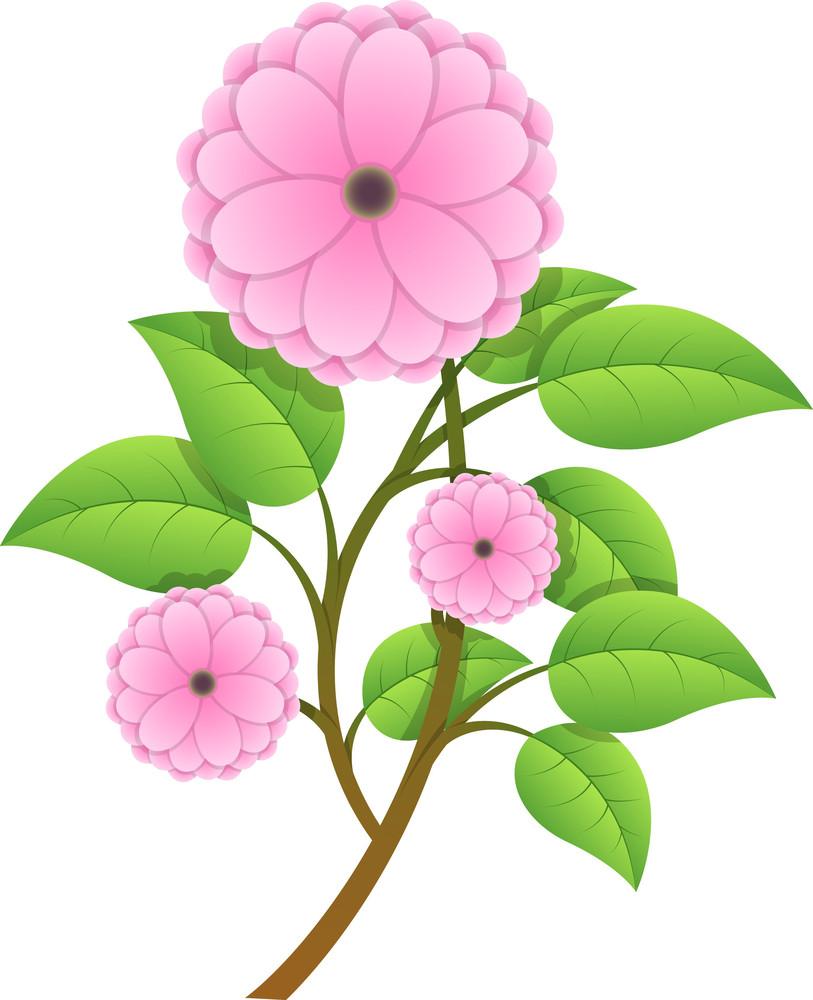 Beautiful Pink Daisy