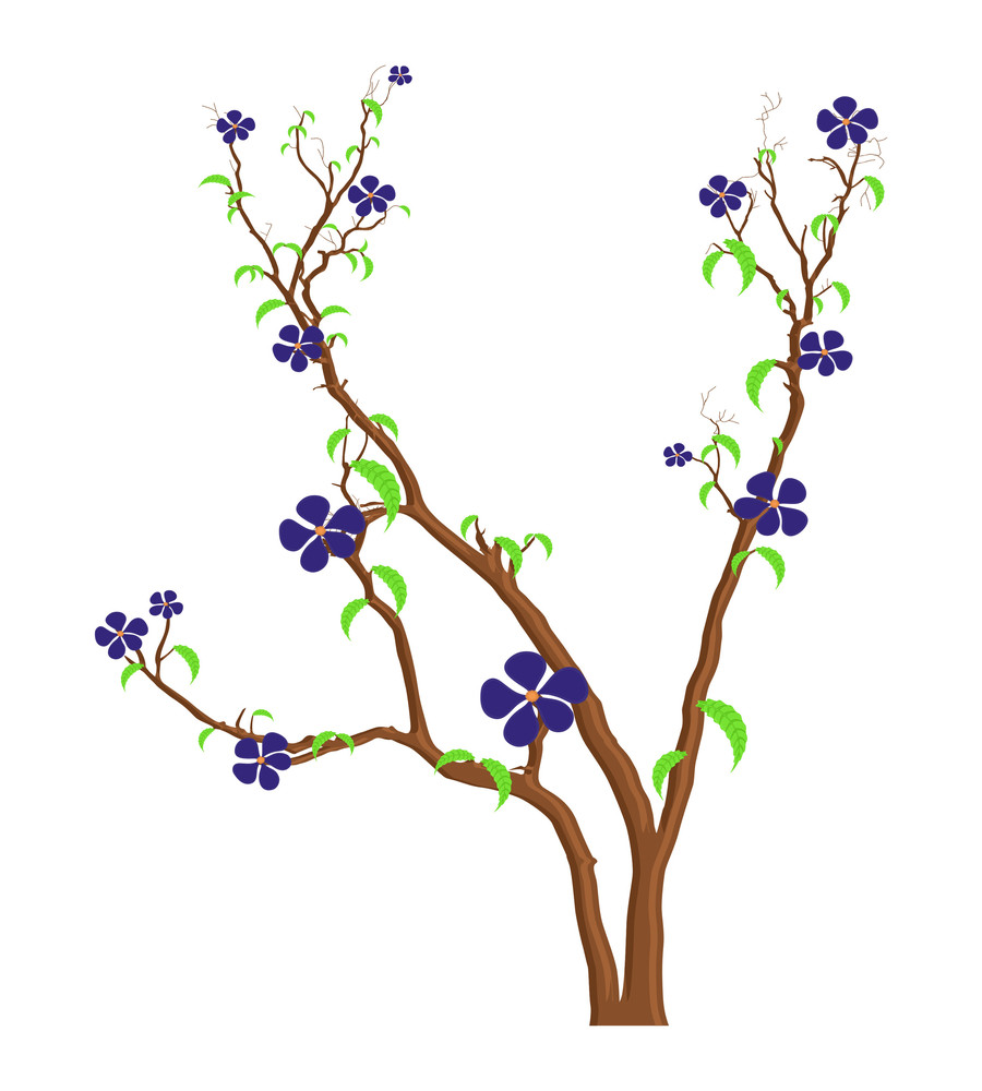 Beautiful Purple Flowers Branches