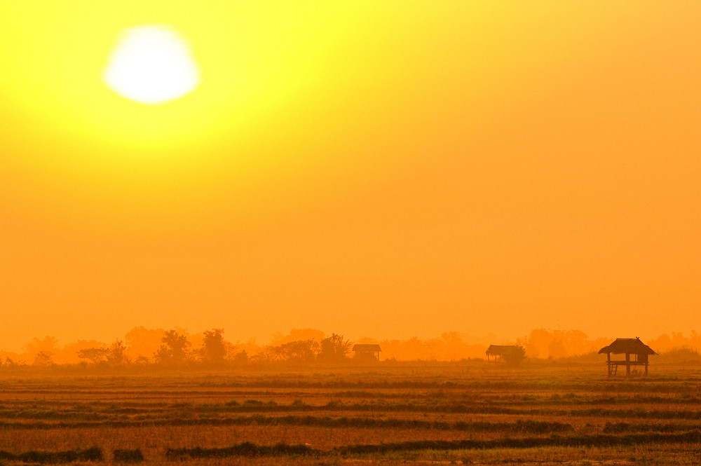 Beautiful sunset over the rice fields
