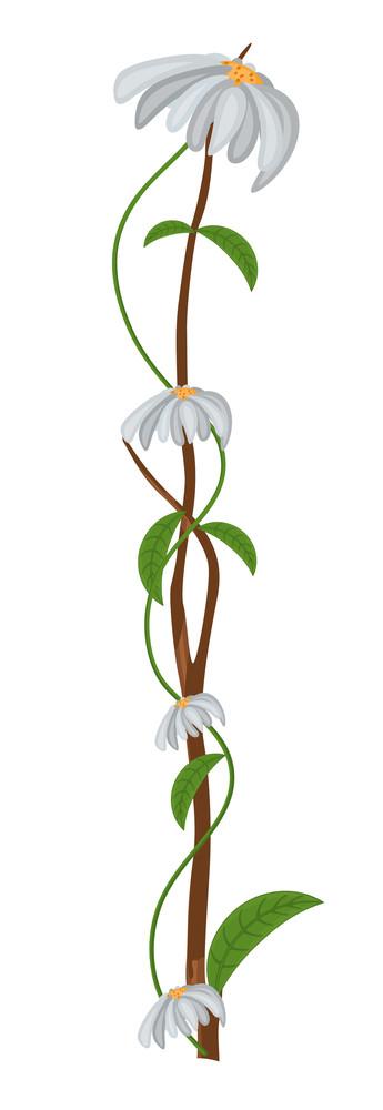 Beautiful White Flowers Branch