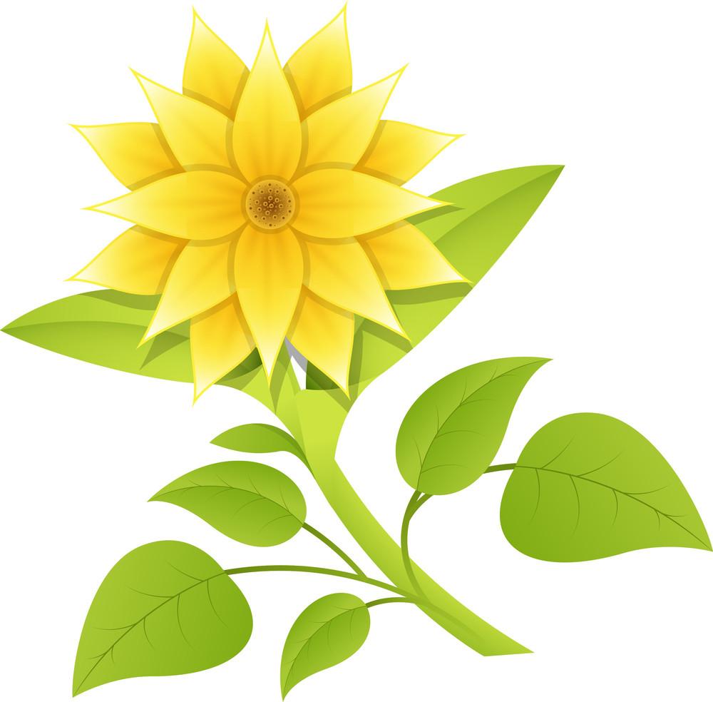 Beautiful Yellow Flower Branch