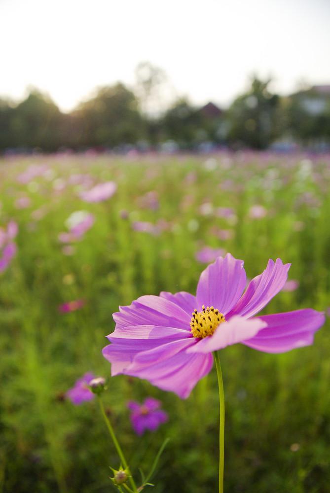 Beautyful Purple flora