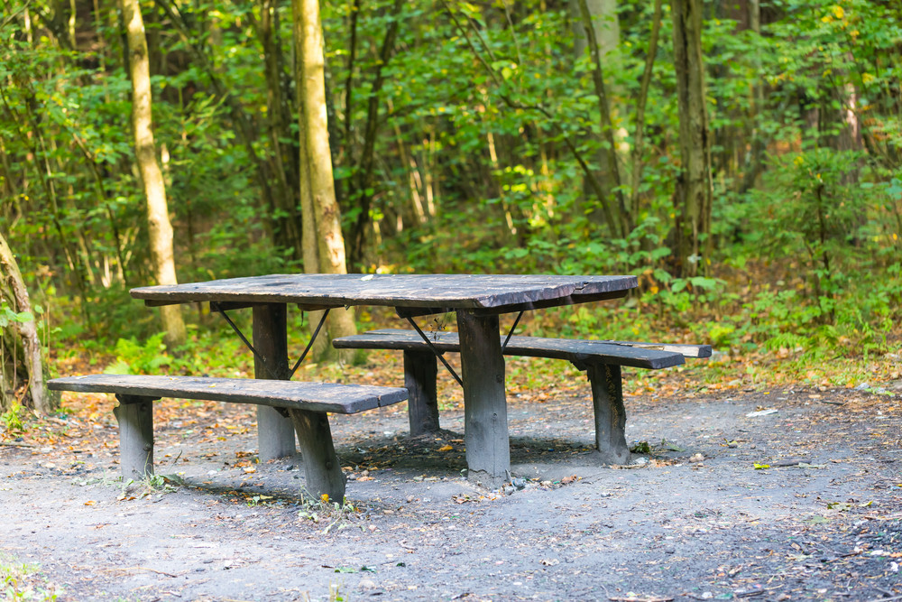 Bench and table in forest. Place for resting for tourists. Natural green forest landscape.