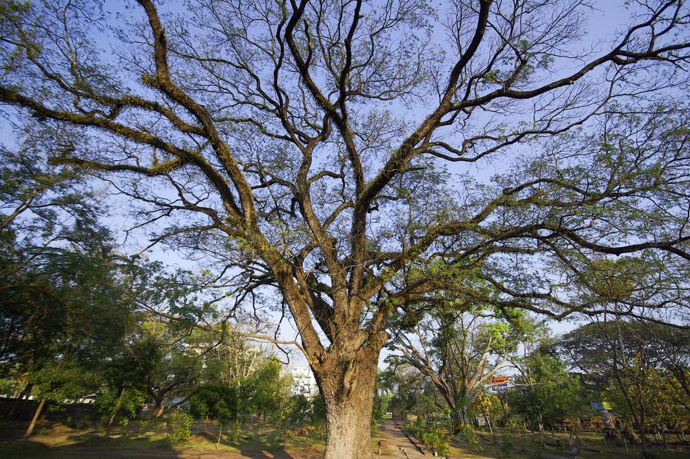 Big tree on blue sky