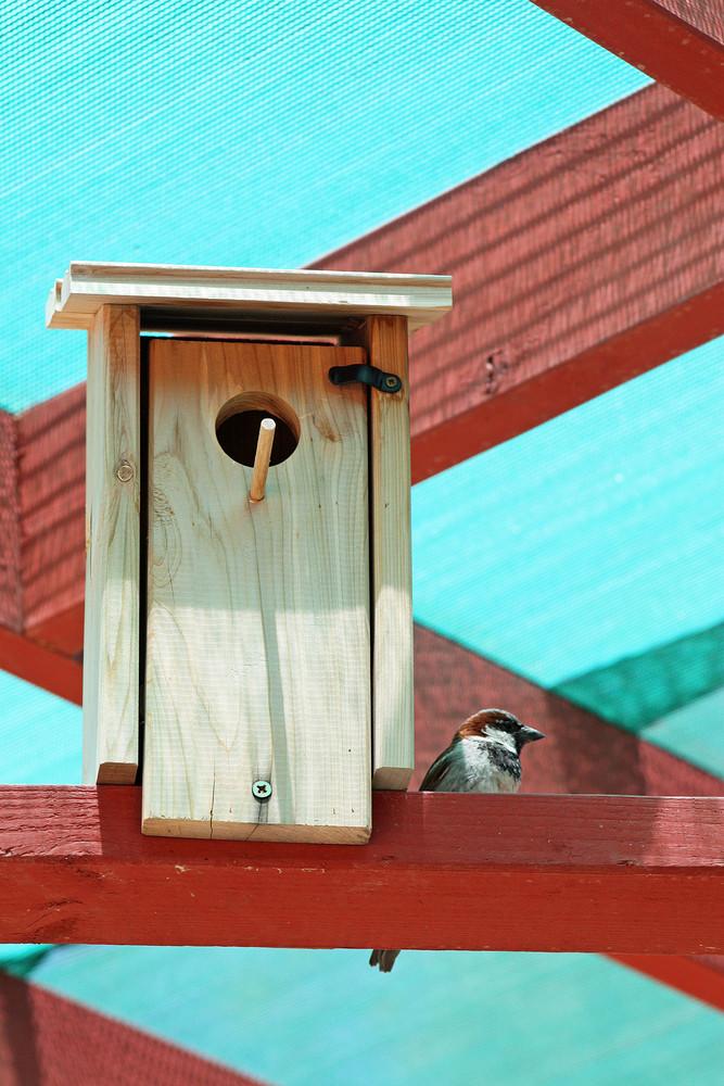 Bird And Bird House