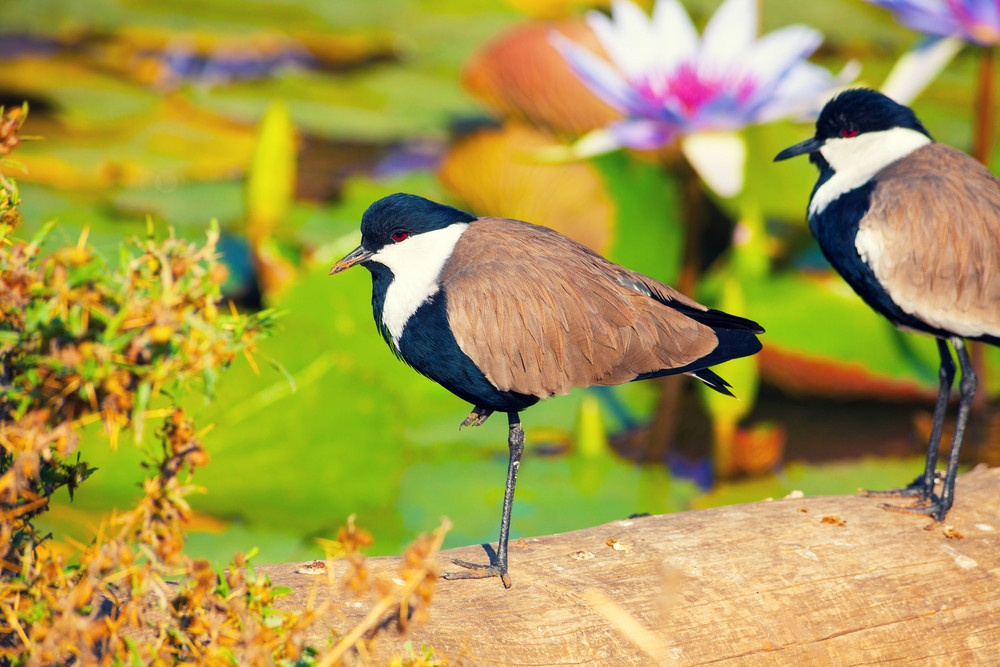Bird in the tropics