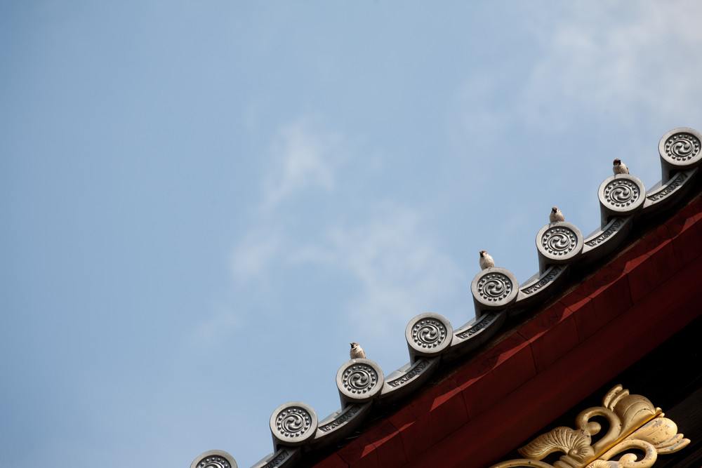Bird on japanese temple roof against blue sky.