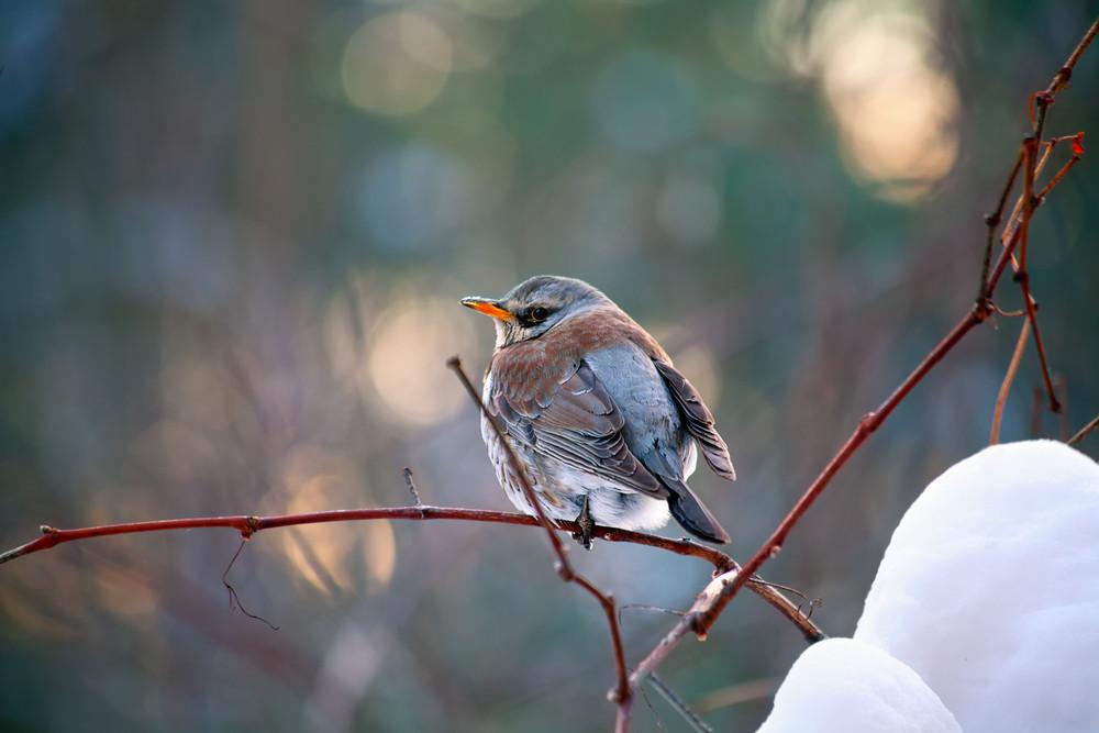 Bird sitting on the branch